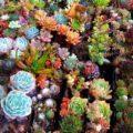 Суккуленты (50 фото): чудные растения,  привыкшие к засухе