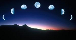 Циклы лунного календаря для садоводов и огородников