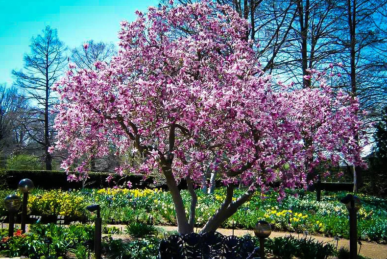 Многолетние садовые цветы для дачи и кустарники – фото, названия, описания