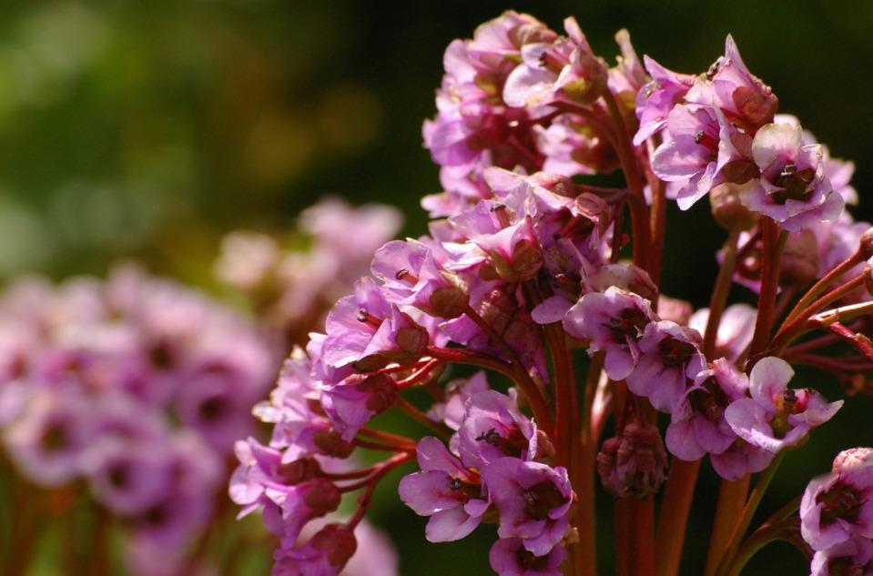 Какие цветы можно сеять под зиму: названия, сроки, плюсы и минусы. Луковичные цветы, которые можно посадить осенью: списки, названия, фото